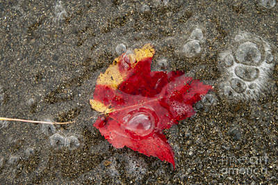 Photograph - Leaf And Sand by Alana Ranney