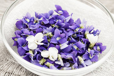 Violet Photograph - Edible Violets In Bowl by Elena Elisseeva