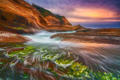 Photograph - Eel Grass Sunset by Darren  White