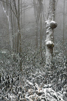 Photograph - Eerie Forest Winter by John Haldane