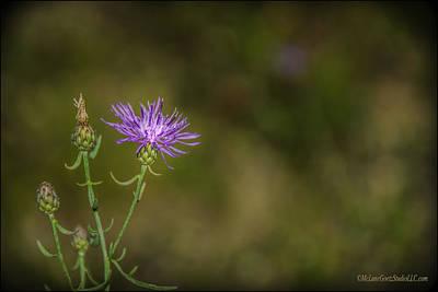 Flora Photograph - Eeyores Blooming Thistle  by LeeAnn McLaneGoetz McLaneGoetzStudioLLCcom