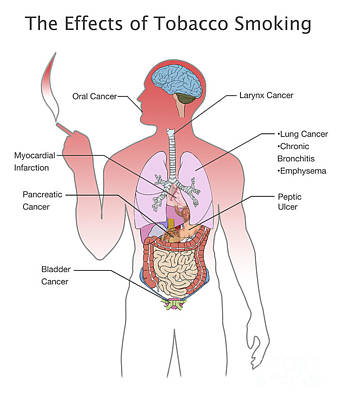 Info Graphic Photograph - Effects Of Tobacco Smoking by Spencer Sutton