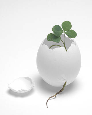 Photograph - Egg And Clover by Krasimir Tolev