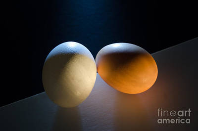 Photograph - Egg Diversity by Randy J Heath