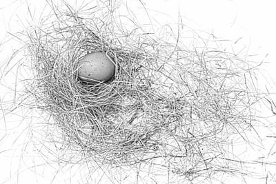 Music Figurative Potraits - Egg in Bird Nest Black and White by Jennie Marie Schell