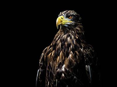 Eagle Wall Art - Photograph - Ego by Christian Lechtenfeld