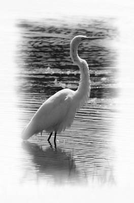 Photograph - Egret 15-02 by Maria Urso