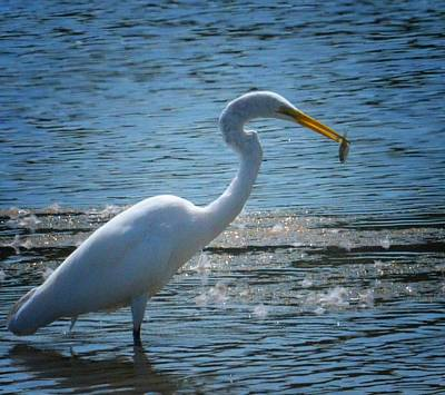 Photograph - Egret 15-03 by Maria Urso
