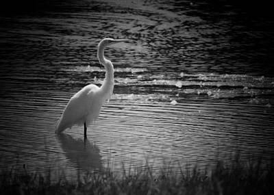 Photograph - Egret 15-05 by Maria Urso