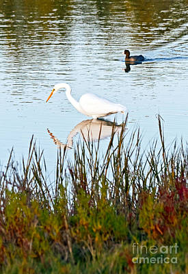 Art Print featuring the photograph Egret And Coot In Autumn by Kate Brown
