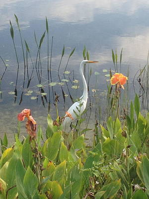 Photograph - Egret And Iris by Barbara Von Pagel