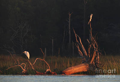 Art Print featuring the photograph Egret And Osprey Sunrise by Deborah Smith