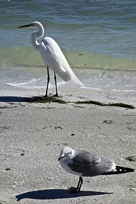 Photograph - Egret And Seagull by Joan Reese
