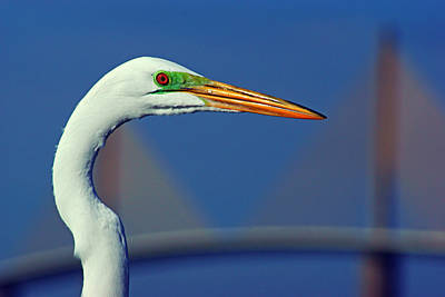 Print featuring the photograph Egret And Skyway II by Daniel Woodrum