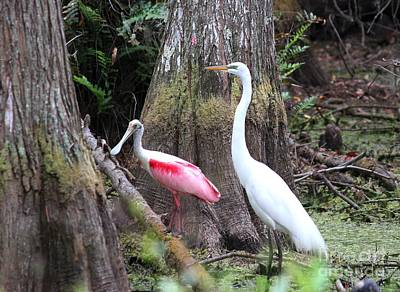 Egret And Spoonbill Art Print by Theresa Willingham