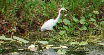 Photograph - Egret At Green Cay by Ron Davidson
