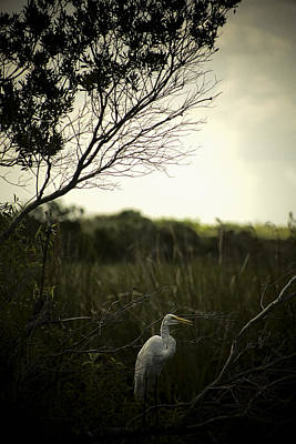 Egret At Sunset Art Print by Bradley R Youngberg