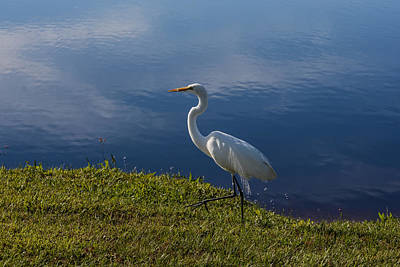 Great Egret Photograph - Egret At The Lake by Zina Stromberg