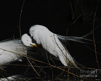 Photograph - Egret Bird City At Avery Island Louisiana by Lizi Beard-Ward