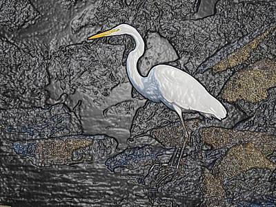 Photograph - Egret By The Bay by Derek Dean