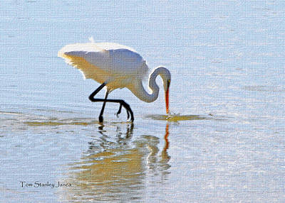 Egret Catches A Fish Art Print by Tom Janca