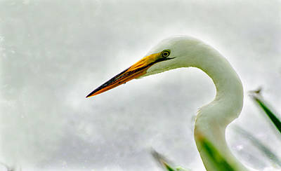Photograph - Egret Close-up by John Johnson