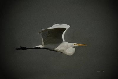 Great White Egret Digital Art - Egret Fly By 2 by Ernie Echols