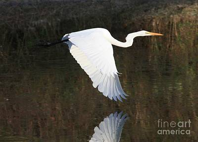 Photograph - Egret Flying Over The Pond by Carol Groenen
