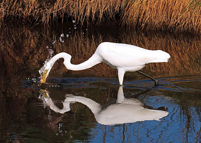 Photograph - Egret Gone Fishing by Lara Ellis