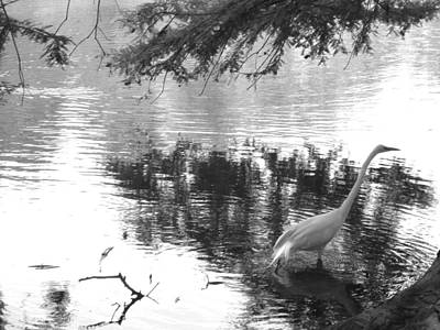 Photograph - Egret In Bayou by Monique Montney