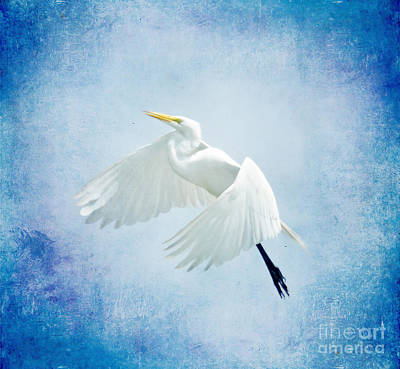 Photograph - Egret In Blue by Kerri Farley