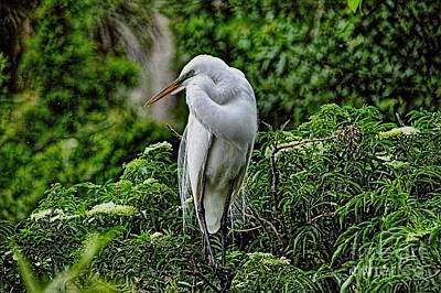 Photograph - Egret In Breeding Plummage_3 by Randy Matthews