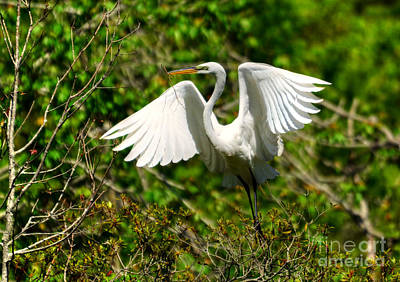 Photograph - Egret In Evenings Light by Kathy Baccari