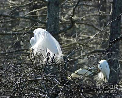 Photograph - Egret In Full Display Lake Martin Louisiana by Lizi Beard-Ward