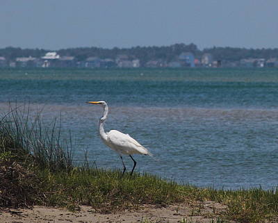 Crane Photograph - Egret In Tall Grass 3 by Cathy Lindsey