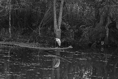 Photograph - Egret In The Atchafalaya Swamp by Ronald Olivier