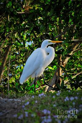 Great Egret Photograph - Egret In The Bush by Quinn Sedam
