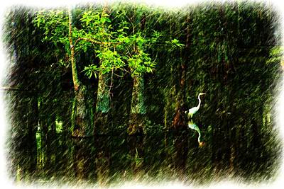 Photograph - Egret In The Louisiana Swamp by Ronald Olivier