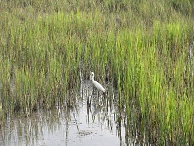 Photograph - Egret In The Marsh by Ellen Meakin