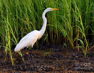 Photograph - Egret In The Marsh by Nick Zelinsky