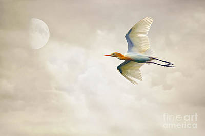 Sky Scape Photograph - Egret In The Sky by Tom York Images