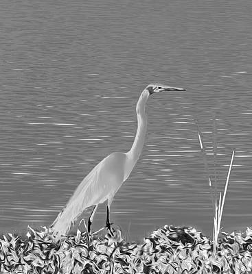 Art Print featuring the photograph Egret In White Satin by Frank Bright