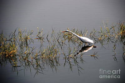 Photograph - Egret On Udaipur Lake by Jacqueline M Lewis
