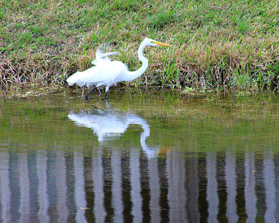 Photograph - Egret by Kathy M Krause