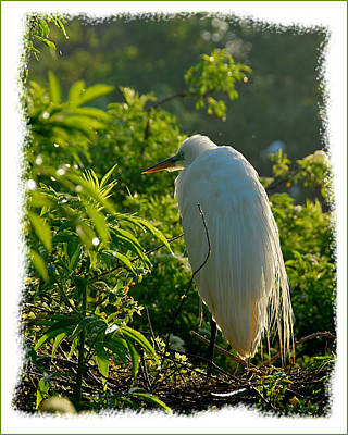 Egret Morning Art Print by Wynn Davis-Shanks