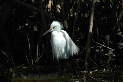 Photograph - Egret Of Sanibel 2 by David Weeks
