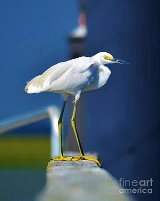 Photograph - Egret On A Balance Beam by Bob Sample