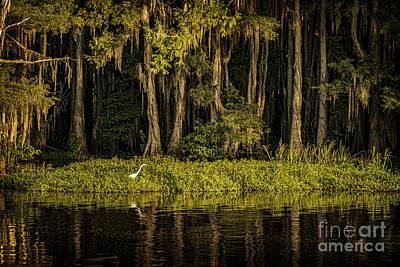 Egret On Caddo Lake Art Print by Tamyra Ayles