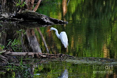 Photograph - Egret On The River  by Andrea Kollo
