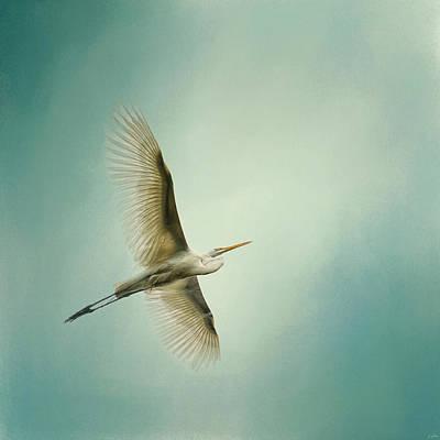 Photograph - Egret Overhead by Jai Johnson